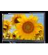 "Konvision KUM-5510W - 55"" 12G-SDI 4K UHD LCD monitor"